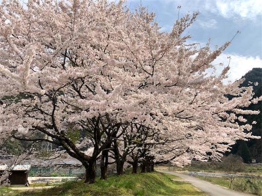 f:id:yukinekokei:20200403211813j:image