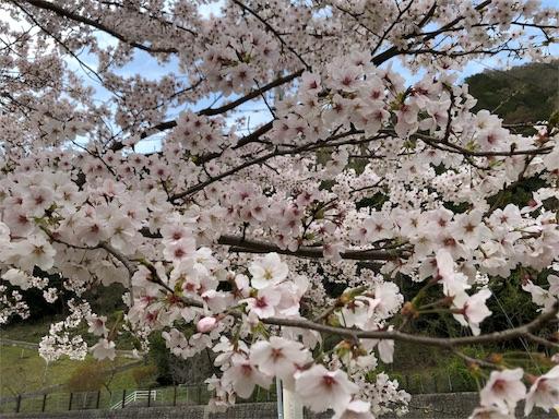 f:id:yukinekokei:20200403212141j:image