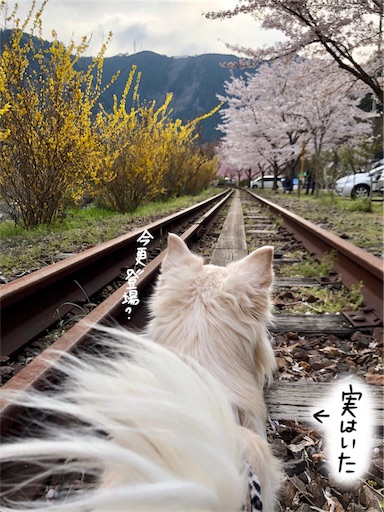 f:id:yukinekokei:20200404154058j:image