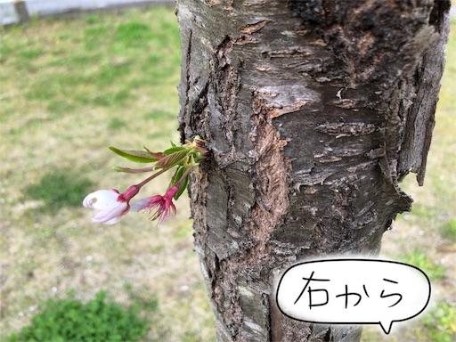 f:id:yukinekokei:20200404154344j:image