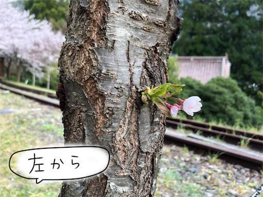 f:id:yukinekokei:20200404154348j:image