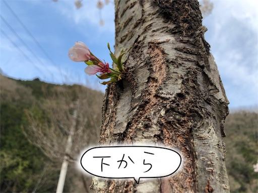 f:id:yukinekokei:20200404154353j:image