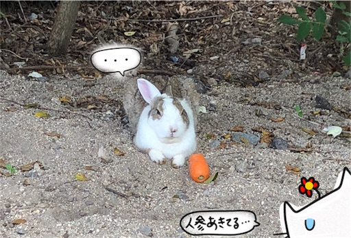 f:id:yukinekokei:20200606201449j:image