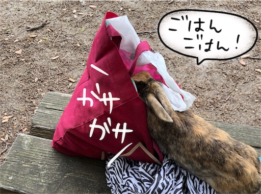 f:id:yukinekokei:20200606213018j:plain