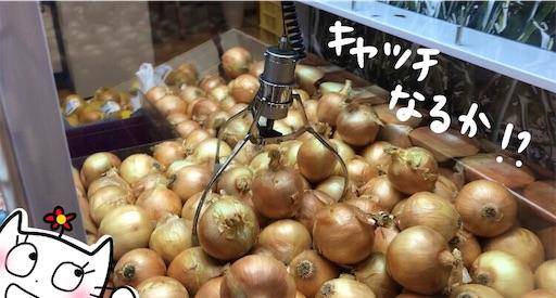 f:id:yukinekokei:20200724223135j:image