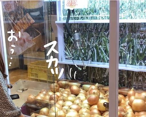 f:id:yukinekokei:20200725221254j:image