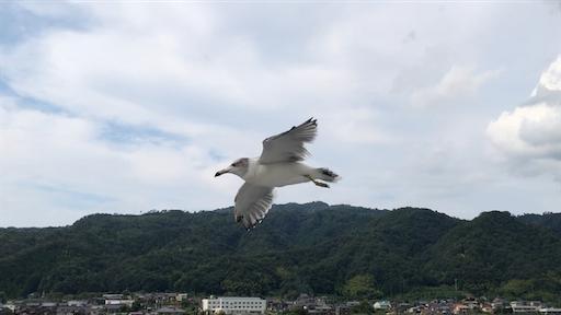 f:id:yukinekokei:20200922180633p:image