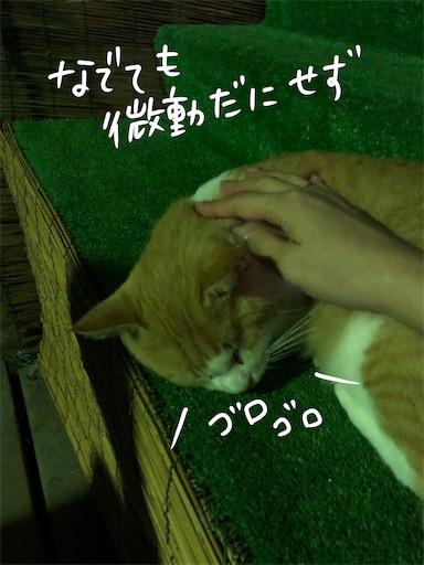 f:id:yukinekokei:20200924143147j:image