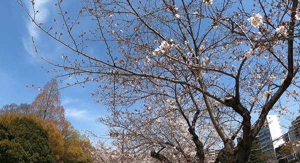 f:id:yukinekokei:20210327211100j:plain