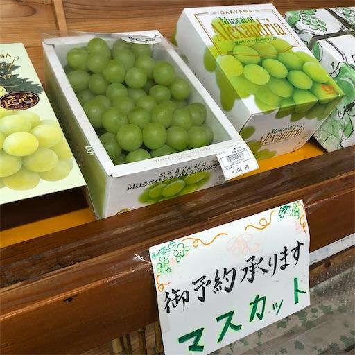 f:id:yukinekokei:20210718123735j:image