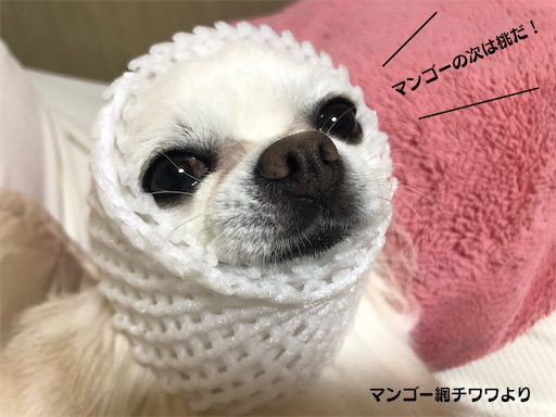 f:id:yukinekokei:20210721074632j:image