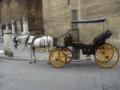 [スペイン]セビージャ大聖堂の前にいた馬車