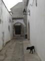 [スペイン]コルドバの路地と犬