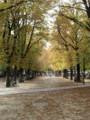 [フランス]パリのリュクサンブール公園