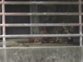 [動物]東山動物園の鹿