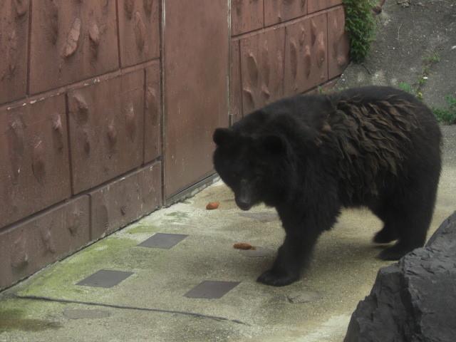 東山動物園の熊