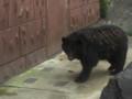 [動物]東山動物園の熊