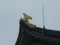 名古屋城の鯱