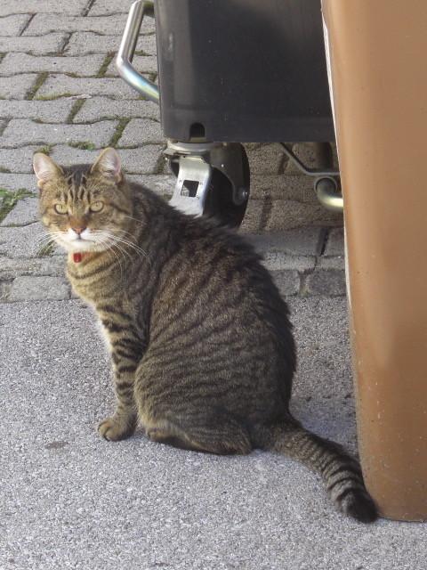 リュブリャナで出会った猫
