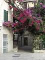 [クロアチア][風景写真][植物]スプリット旧市街