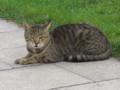 [クロアチア][猫]スプリットにて。