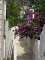 [クロアチア][風景写真][植物]ドブロブニク旧市街付近の住宅街にて。