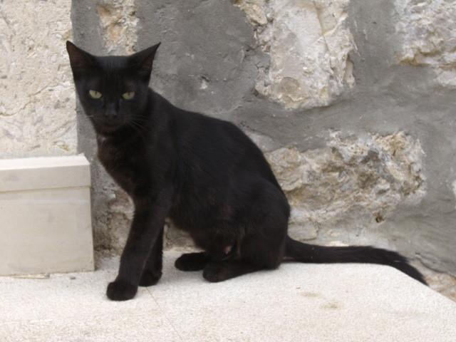 [クロアチア][猫]