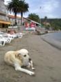 [クロアチア][犬]クロアチアの小島で見つけた犬