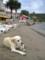 クロアチアの小島で見つけた犬