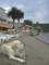 クロアチアのロプド(Lopud)島にて。