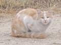 [猫]カッパドキアの野良猫さん