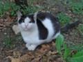 [トルコ][猫]ブルサで遭遇した猫さん
