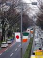 [風景写真]表参道にて、日章旗とアイルランド国旗