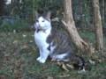 [猫][オランダ]アムステルダムの宿で飼われている猫