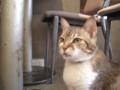 [台湾][猫]極簡 cafe