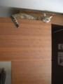 [台湾][猫]猫カフェにて