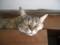 猫カフェにて