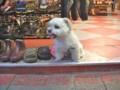 [台湾][動物]看板犬
