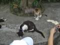 [台湾][猫]侯硐の猫さん
