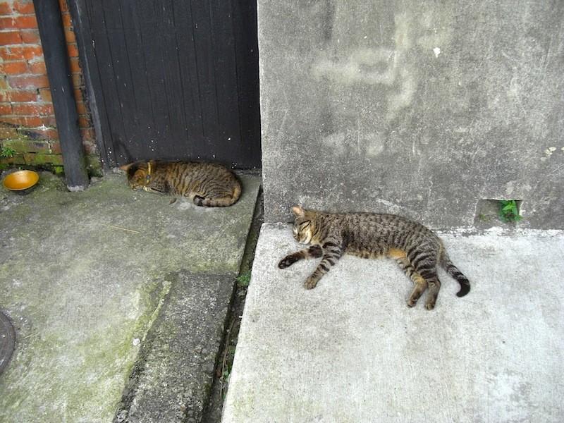 暑さでぐったりしている猫さん