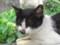 侯硐の猫さん