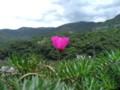 [台湾][植物]花写真