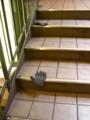 [落とし物]手袋が片方ずつ
