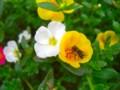 [植物]花と虫