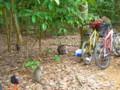 [シンガポール][風景写真][動物]ウビン島の猿