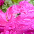 [植物]花と昆虫