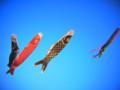 [風景写真]鯉のぼり