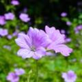 [植物]花