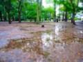 [風景]公園の水たまり