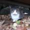 雨宿りする猫